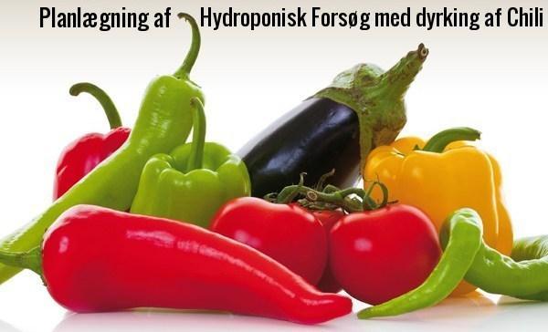 Visning af opstart af hydroponisk projekt hos Nyttigbras.dk