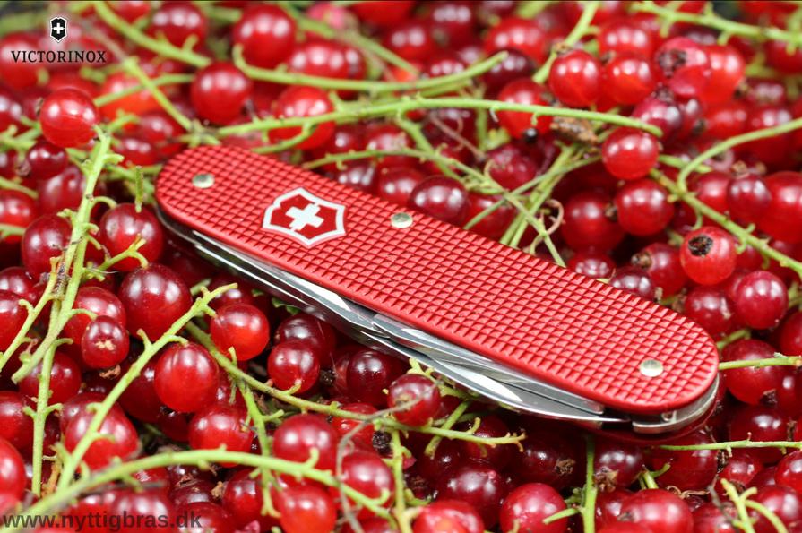 Victorinox Cadet Alox Limited Edtion lommekniv i rød farve med flotte bær