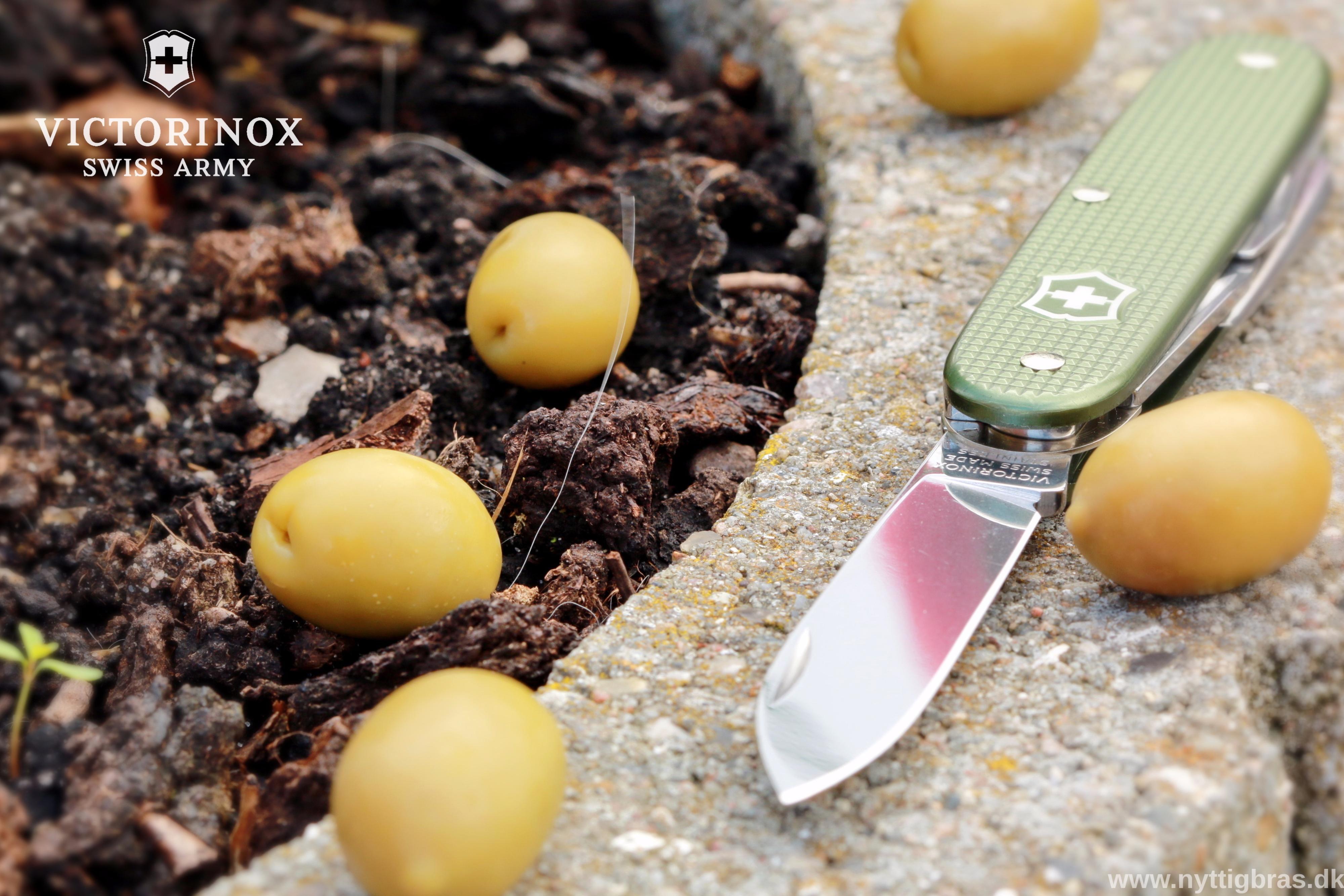 Portræt af Victorinox Lommekniv Pioneer Alox Limited Edition 2017 Olive med oliven